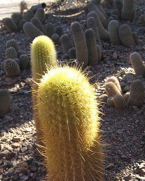 A prickly decision